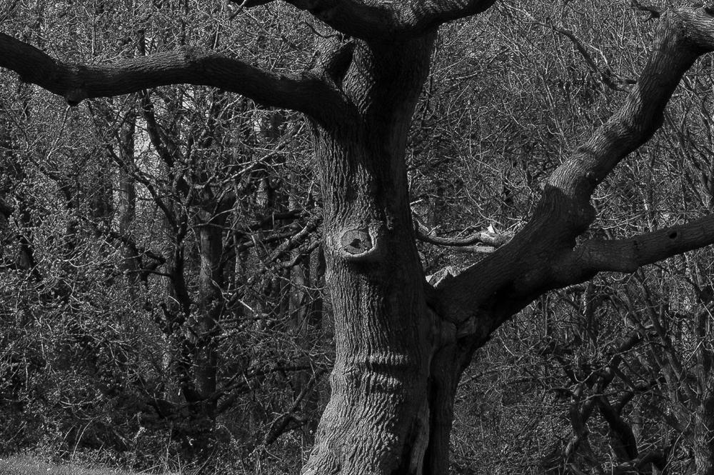 Leica Monochrom and 35mm Summarit f/2.5 (Photo Thomas Stanworth)