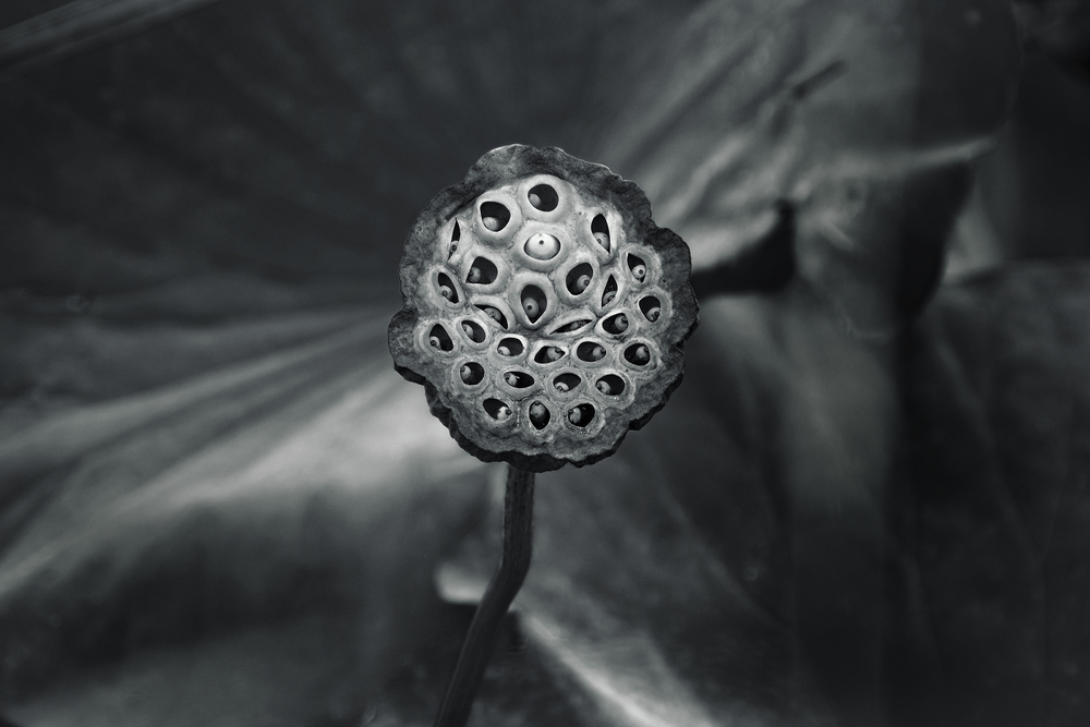 The seed of an idea: X-Pro 1 and 18-135mm zoom at 135mm