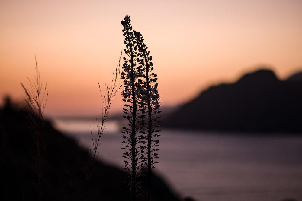 Sea Squill Sunset, 60mm Apo Macro Elmarit, ISO 640