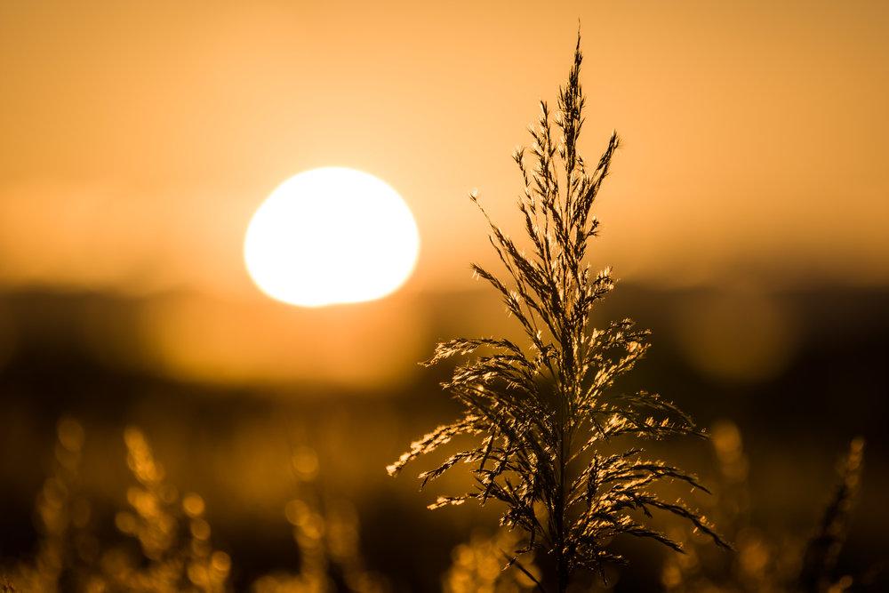 Sunset, Apo-Vario-Elmarit-SL, 90-280mm