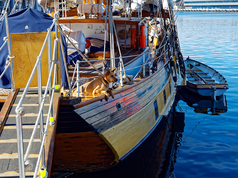 A more colourful and traditional ship is patrolled by its faithful guard. Hobart Dock.