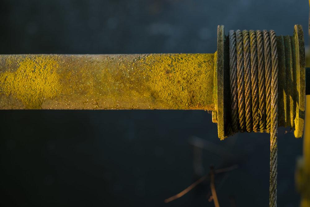 Yellow - ISO 100 1/125th Leica M10