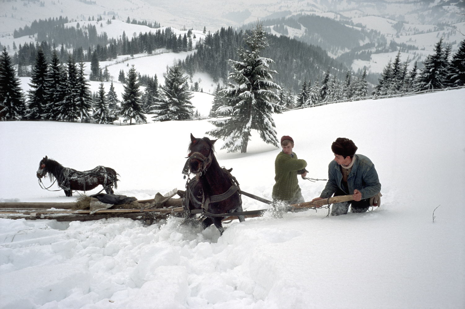 Stuck in thigh deep snow with only one horse harnessed to the sledge (Leica M6 and 35mm f/1.4 Summilux)