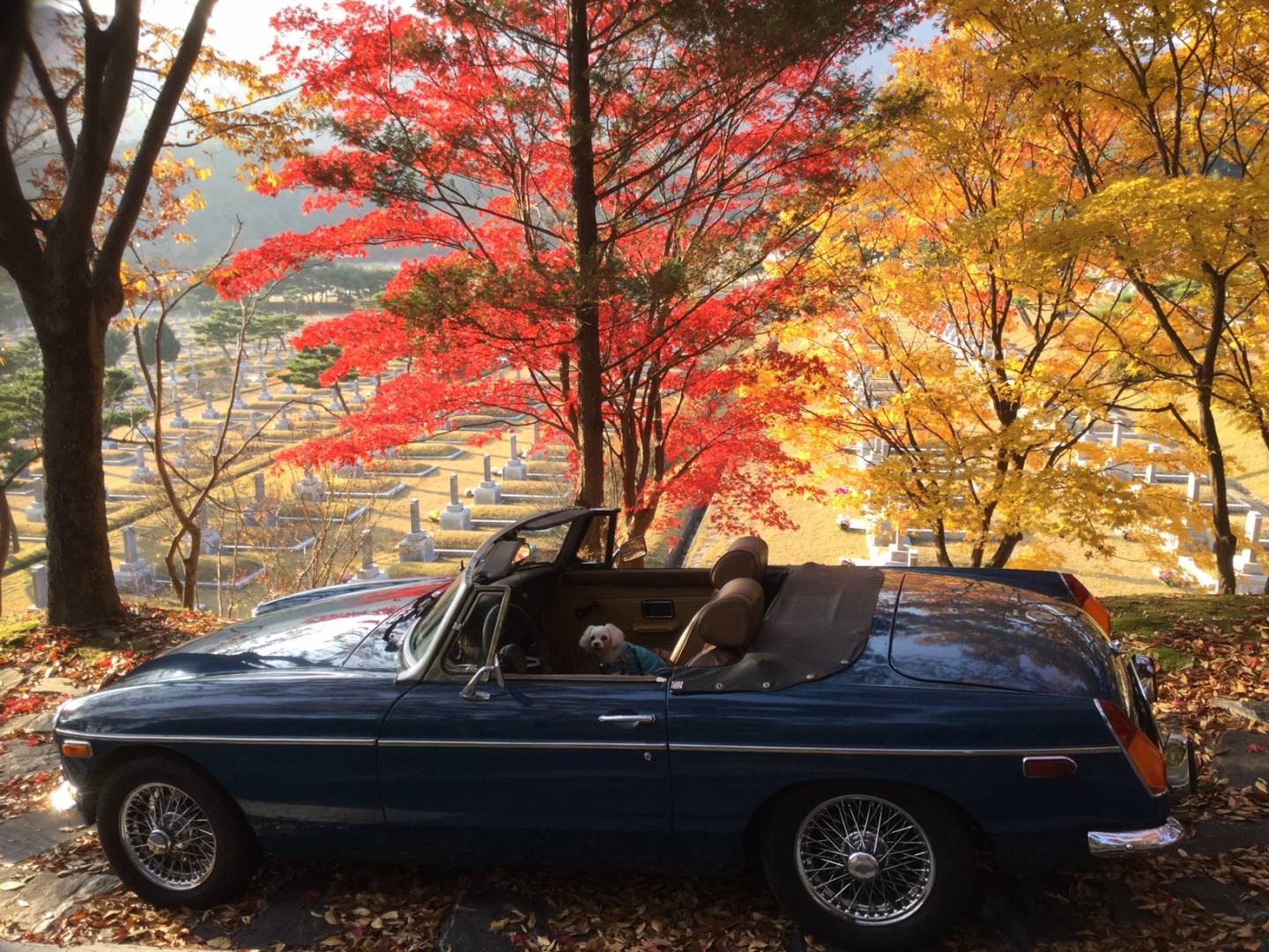 "George's MGB. Classic blue, great wire wheels. With ""BB"" Furst sitting in the passenger seat"