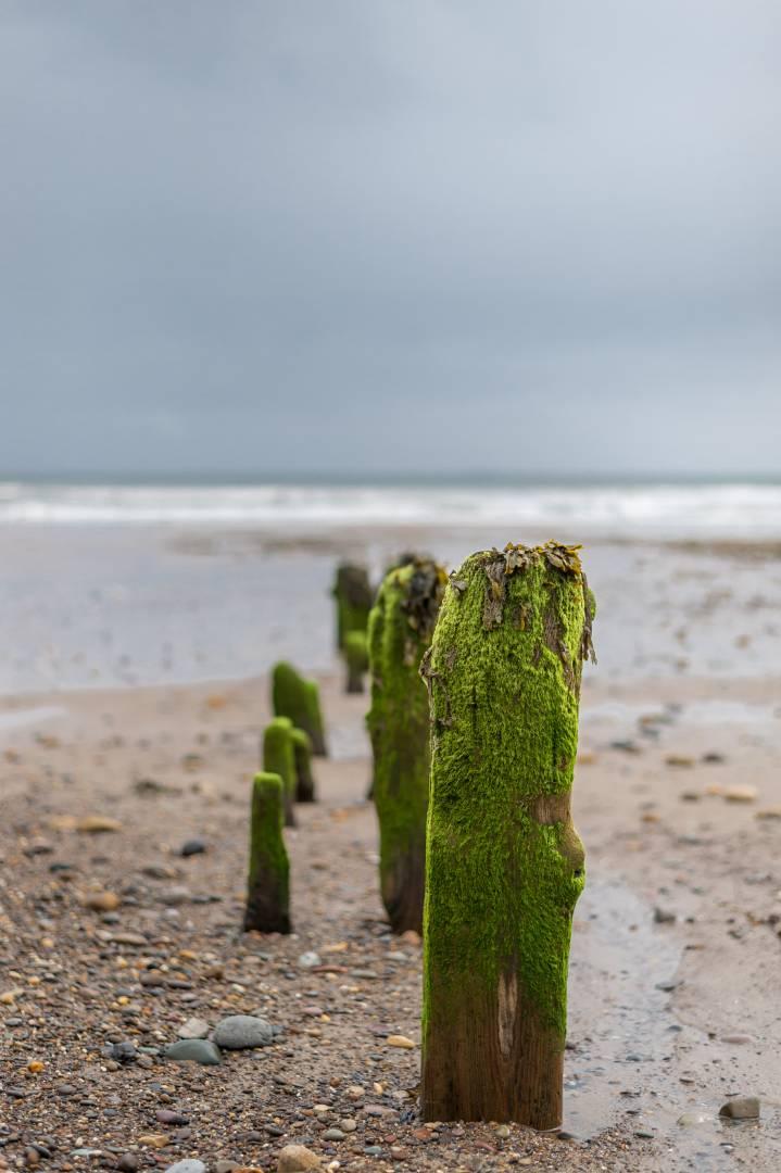 Sandsend Groynes - Nikon Df