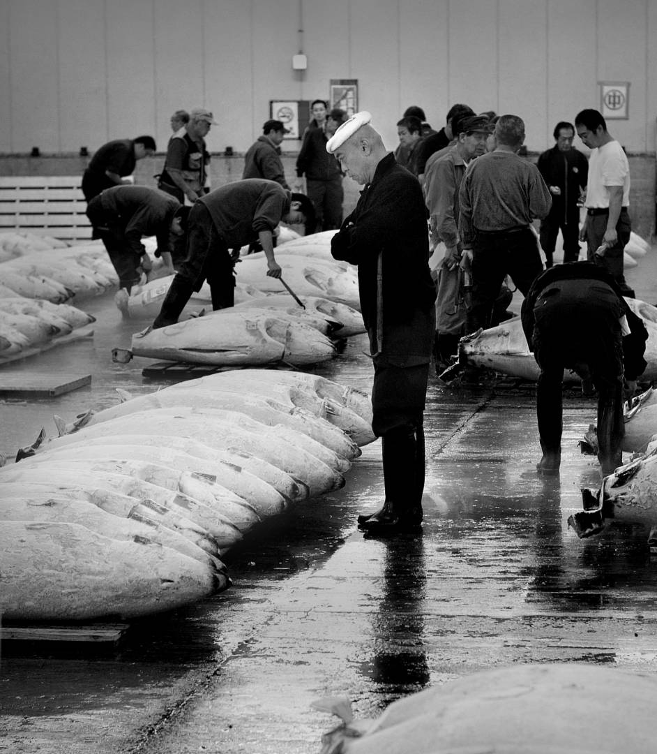 Tsukiji tuna auction, Leica M8 50mm early rigid Summicron