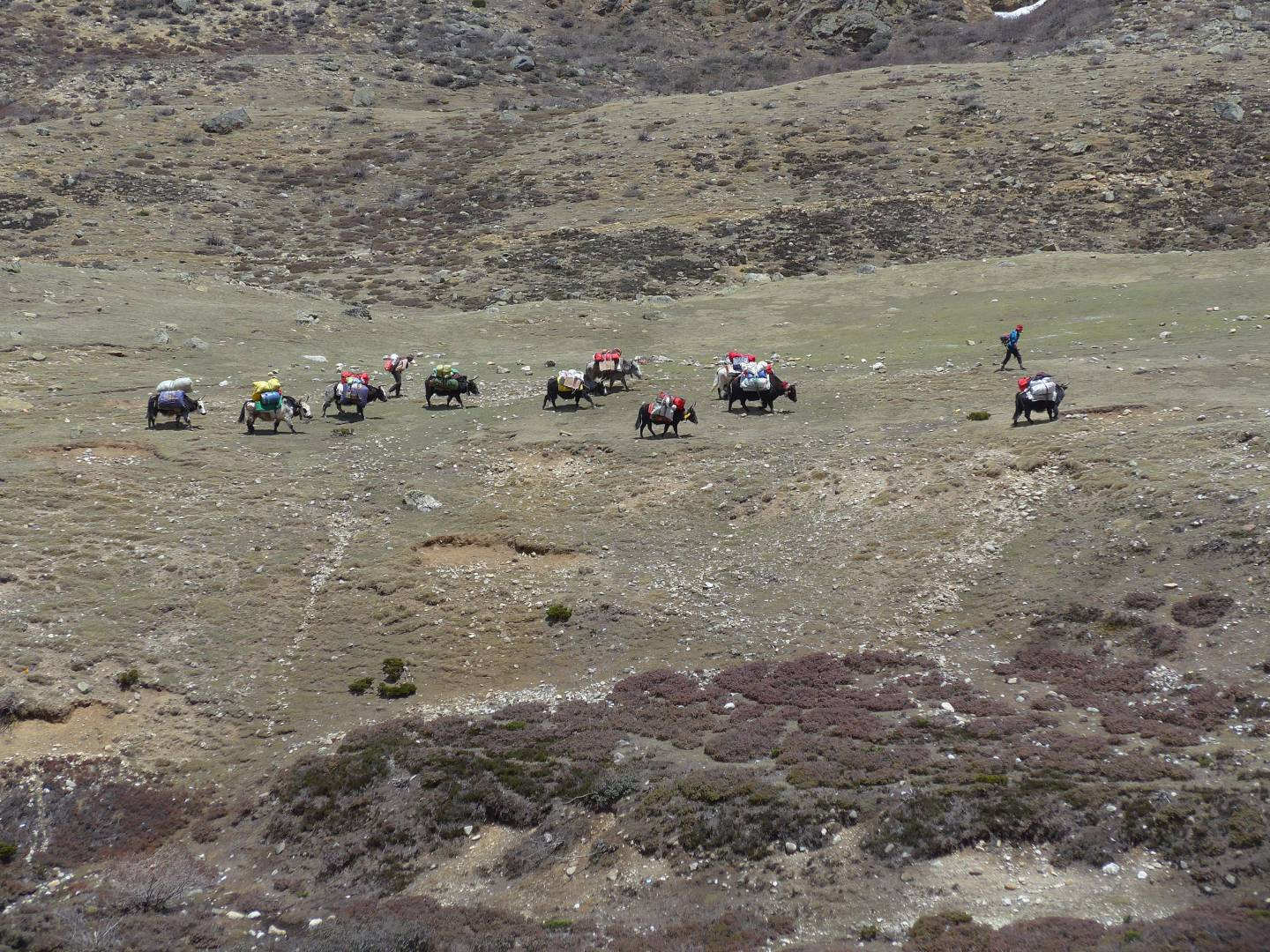 Our yak train plods across the valley
