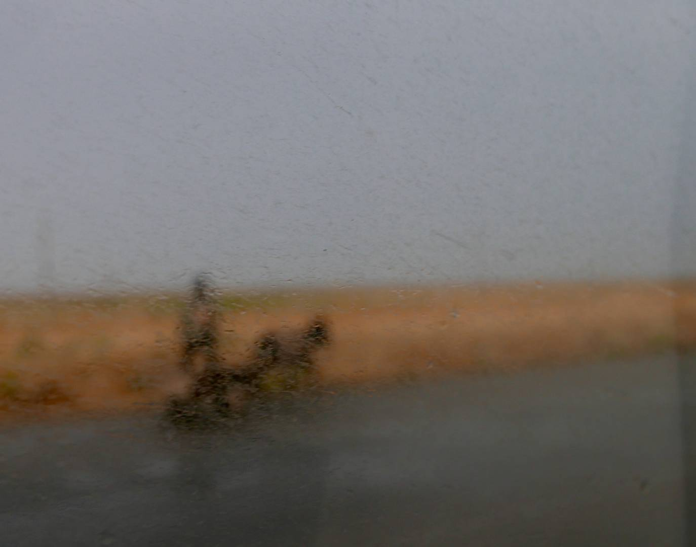 onkey Cart, through the side window of the minibus on a rainy day on the road in Uzbekistan