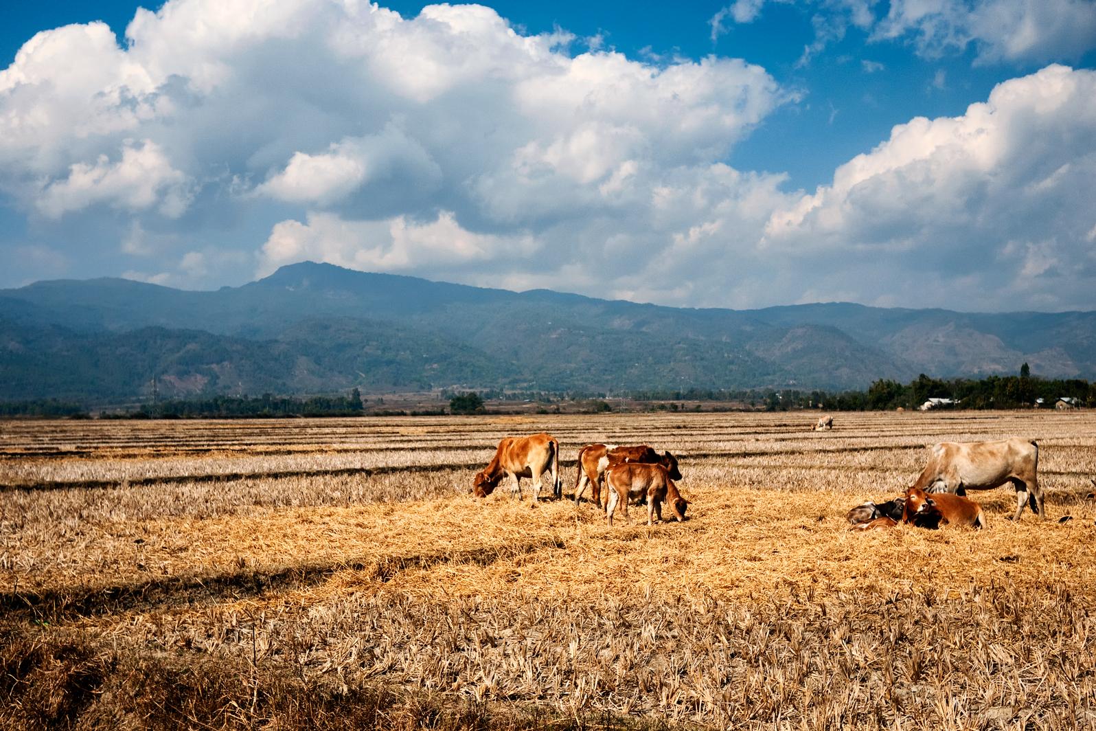 The Battlefield of Potsangbam